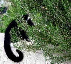 gato-escondido-com-rabo-de-fora