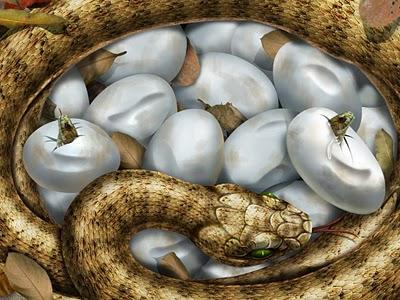 OVO da Serpente